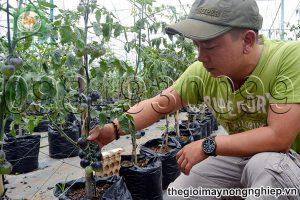 Chàng thanh niên 29 tuổi sở hữu vườn cà chua đen bạc tỷ