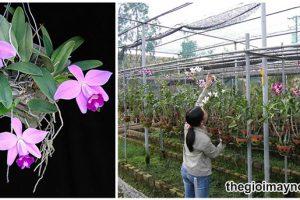 Rỉ tai cách làm phân hữu cơ cho phong lan từ A đến Z
