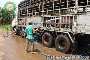 """""""Giải cứu"""" hiệu quả chăn nuôi lợn trước thực trạng rớt giá"""