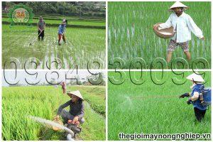 4 kỹ thuật chăm sóc lúa đem lại năng suất cao