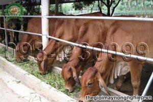 Kỹ thuật chăm sóc và nuôi dưỡng vật nuôi trong giai đoạn chuyển mùa